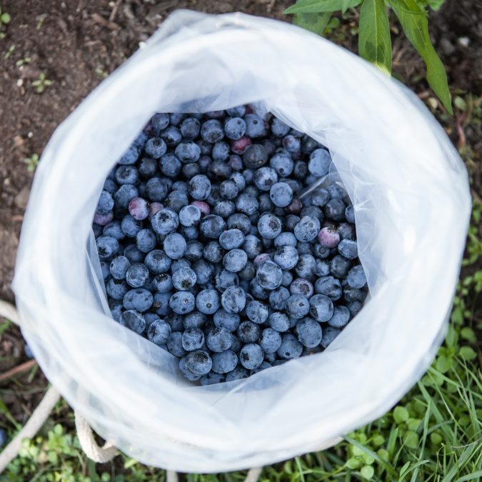 Fresh Blueberry Ice Cream | A Sweet Spoonful